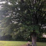 Toller-Baum-Schwindegg-_sollte-Naturdenkmal-sein.jpg