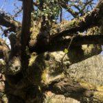 Alter Baum mit neuem Trieb